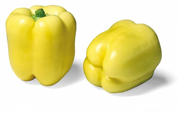 Blondy - paprika
