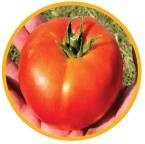 Gravitet - rajčica