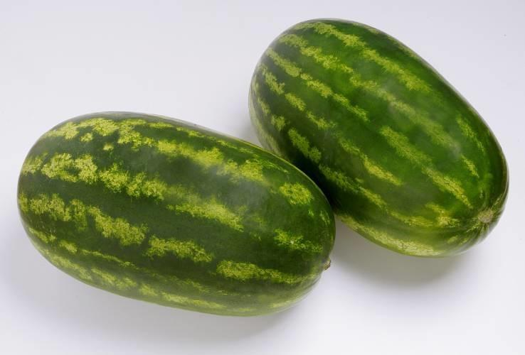 Farao - lubenica