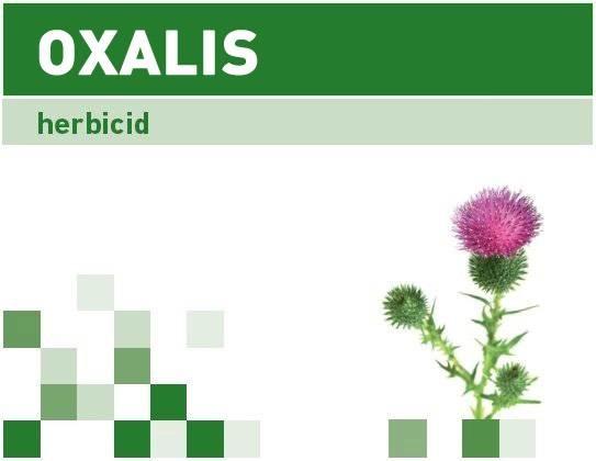 Oxalis ®