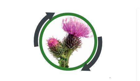 Basagran 480 - kontaktni herbicid