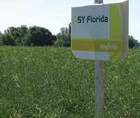 SY Florida