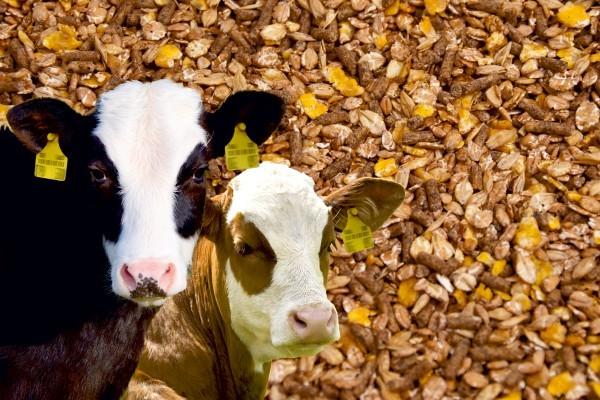 Savjetnik na terenu za hranidbu domaćih životinja (m)