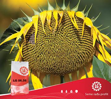 Suncokret LG 56.35