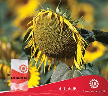 Suncokret LG 56.63 CL