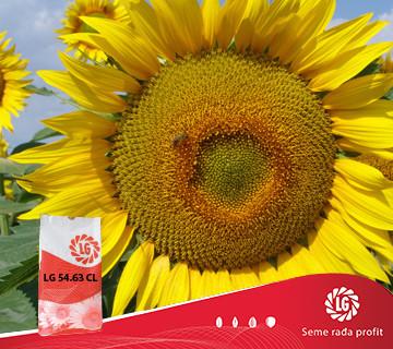 Suncokret LG 54.63 CL
