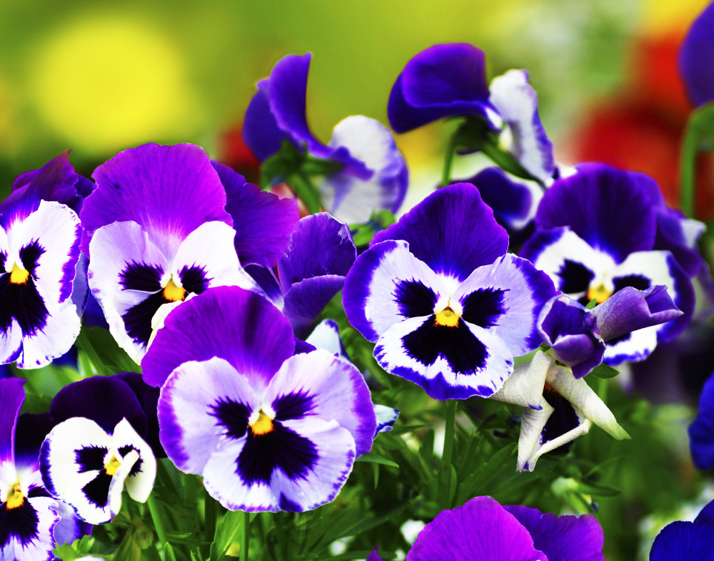 Proizvodnja i prodaja balkonskog cvijeća