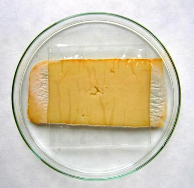 Zaštita i njega sira - natamicin