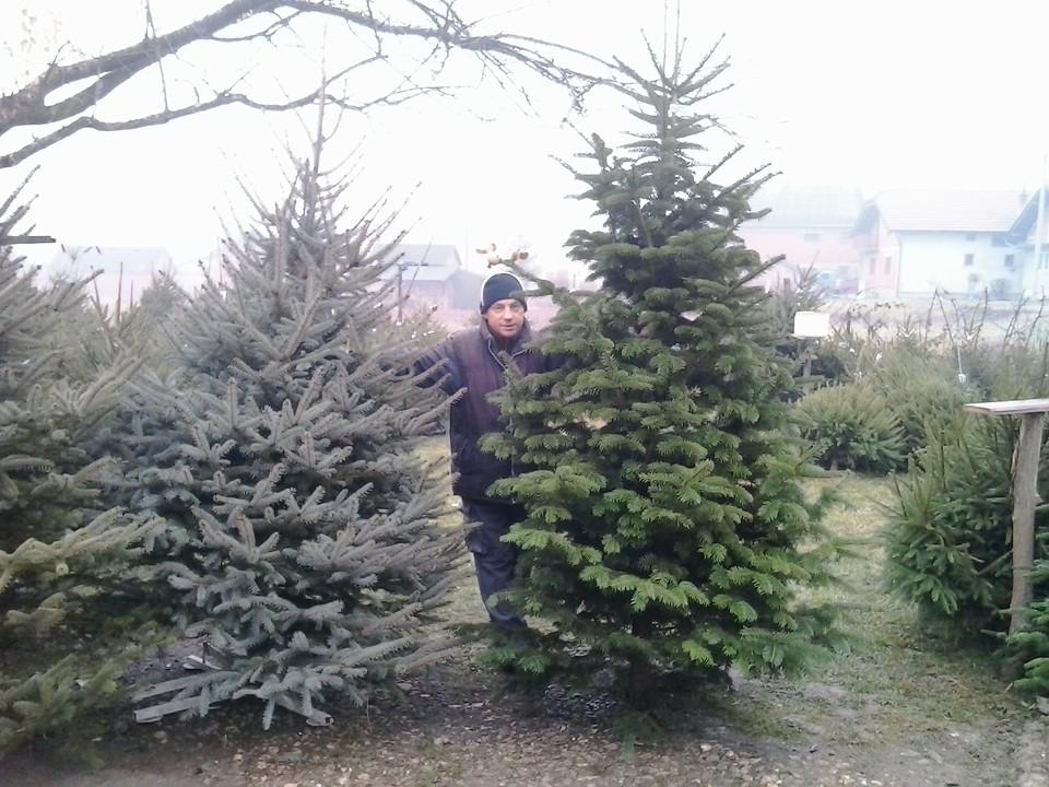 Božićna drvca