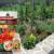 Kako uspjeti u uzgoju domaćih eko rajčica?