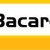 SY Bacardi CLP- hibrid suncokreta