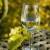 Bjelo vino