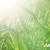 Impro Grain - prirodna rješenja za izdašnije usjeve