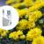 Iskoristite 35% popusta na KristalonTM Super White gnojivo