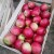 Jabuka veće količine