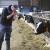 MOLD-ZAP -Snažan inhibitor plijesni za primjenu u hrani za životinje i uskladištenim žitaricama