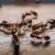 EC gel protiv mrava uništava cijelu koloniju!