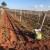 Jesenska gnojidba - preduvjet dobre berbe sljedeće godine