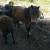 Prodaje se pony