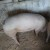 Prodajem dve debele svinje