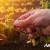 SOIL-SET® AID - Alltechovo rješenje za zdravo tlo