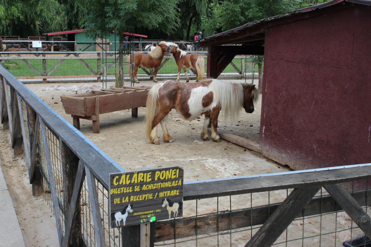 Mlečne krave i izložba životinja Pantelimon kod Bukurešta (55836)