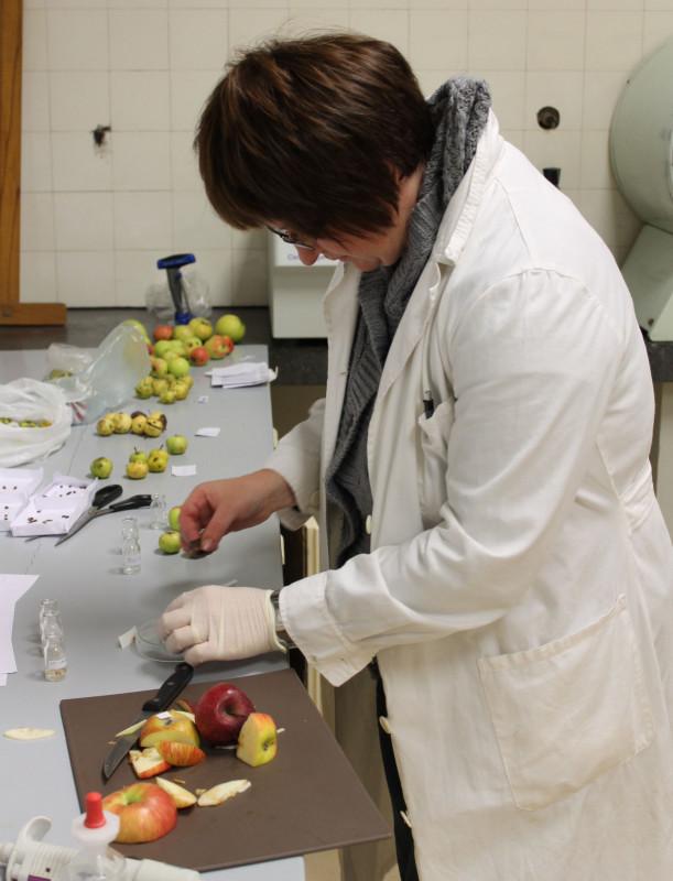 Analize fizikalno-kemijskih svojstva plodova (46256)