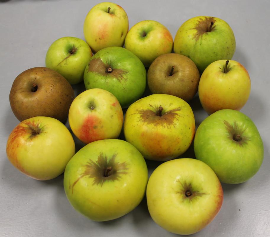 Neprskani plodovi jabuka (46258)