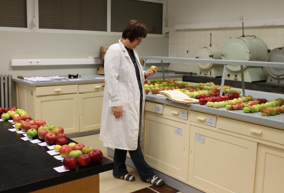 U laboratoriju Zavoda za voćarstvo (46245)