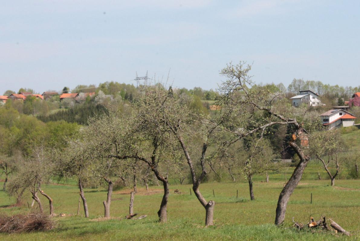 Revitalizirati stara stabla (46251)