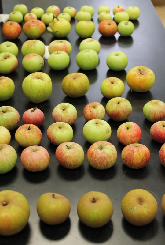 Plodovi starih sorti (46253)