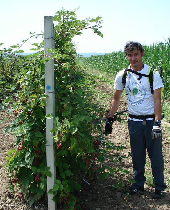 Robert Slezak mikorizira kupinjak (46570)