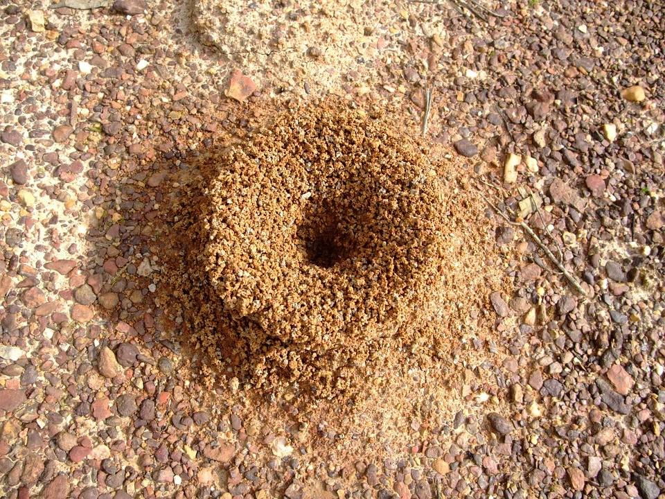 Mravinjak