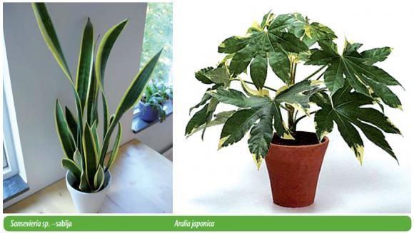 Kako odabrati sobne biljke (3901) - Ukrasno i ljekovito bilje - AgroKlub.com
