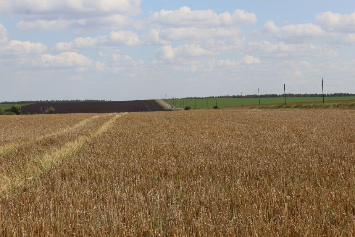 Beskrajna polja