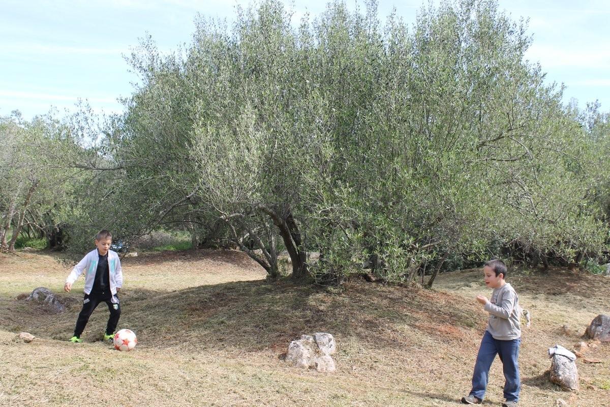 Dani masline - stručni izlet na Ugljan (36118)
