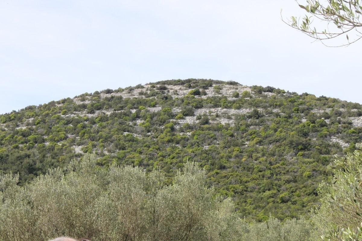 Dani masline - stručni izlet na Ugljan (36136)