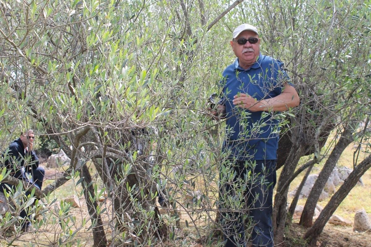 Dani masline - stručni izlet na Ugljan (36141)