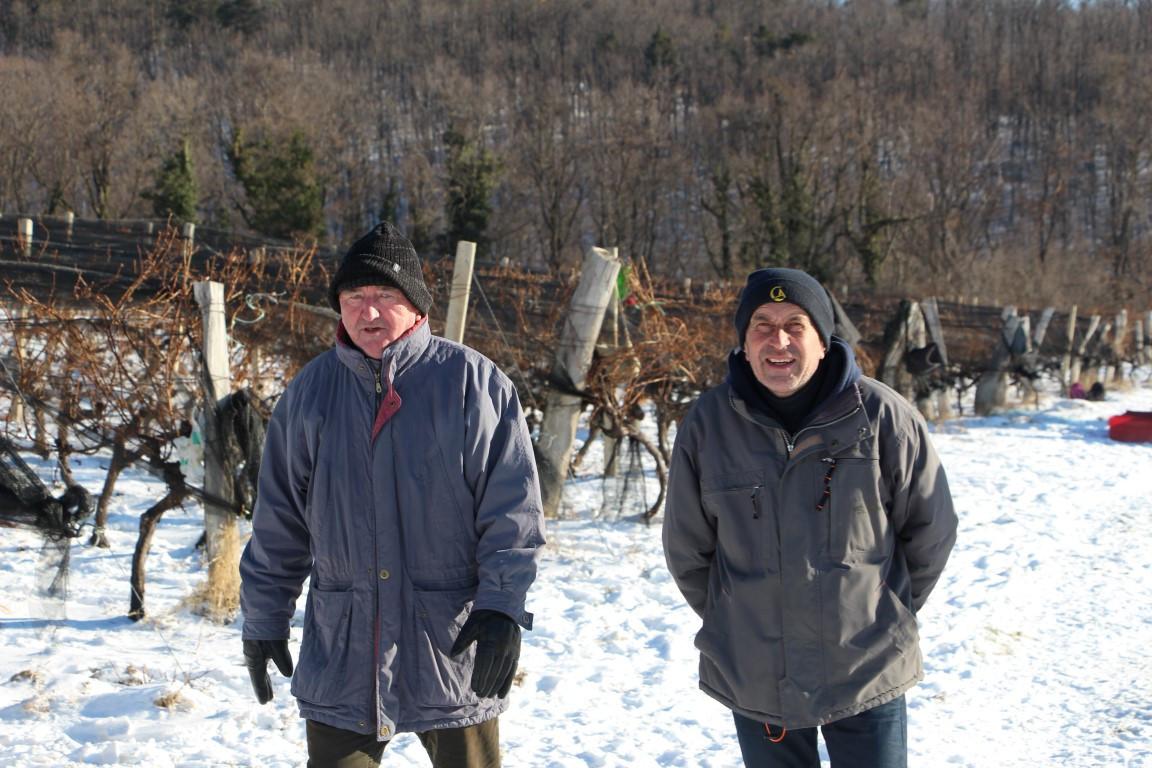 Ledena berba u Kutjevu (46946)