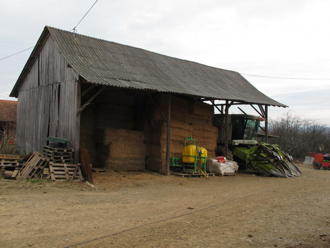 Tov teladi – isplativa grana poljoprivrede (46355)