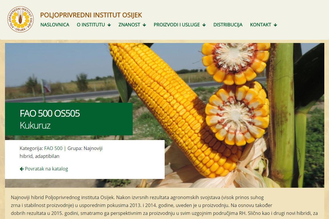 Kukuruz FAO 500 OS505 (50159)