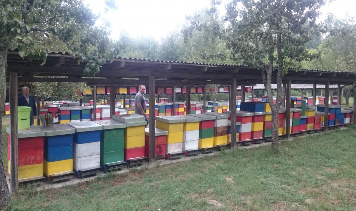 Pčelinjak u Livada u šašu (57769)