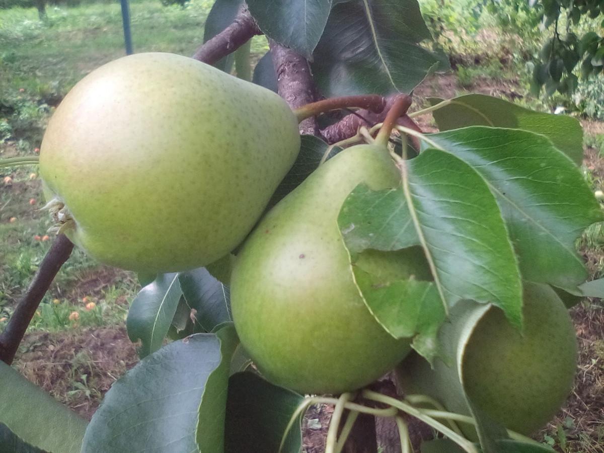 Zdravi plodovi (56578)