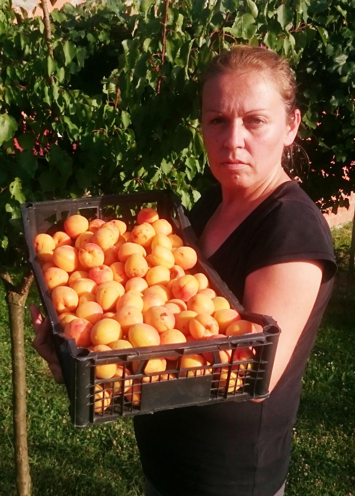 Puno plodova poklonjeno rodbini i prijateljima (56575)