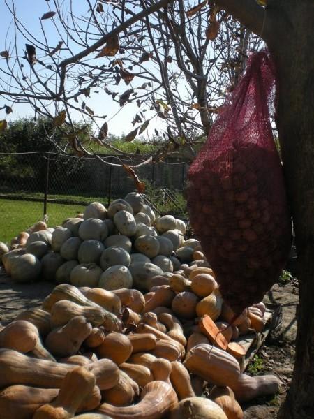 Jesenji plodovi