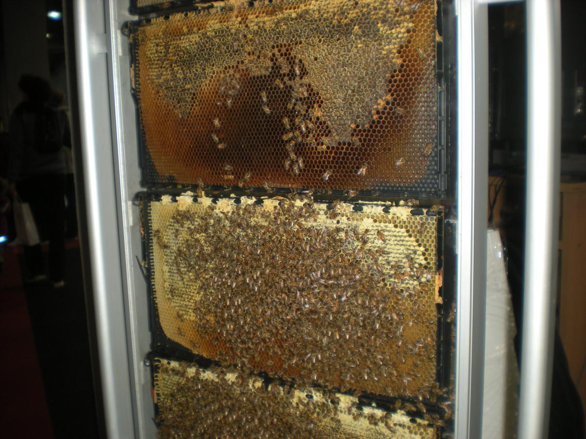Pčele rade za vreme sajma (63005)