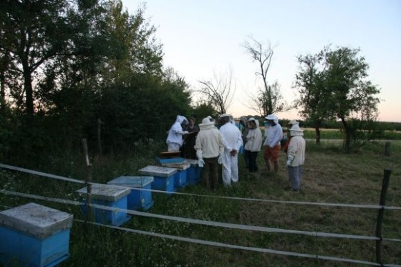 Organsko pčelarstvo