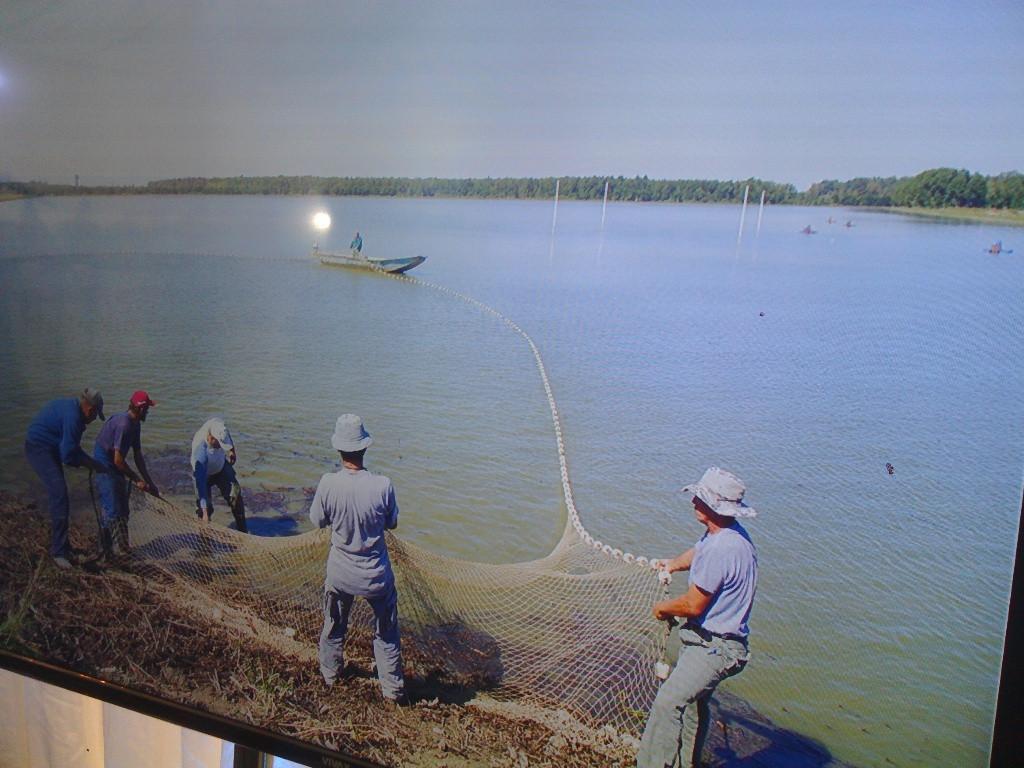 Pogon za preradu ribe drži u životu i ribnjake, te i radnike u toj proizvodnji (46464)