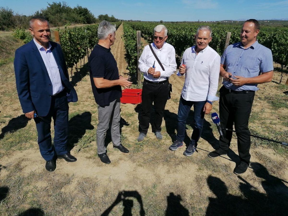 Očekujemo dobru vinogradarsku godinu, rekao je Glavić