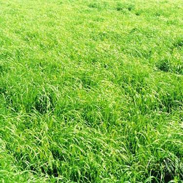 Krmno bilje